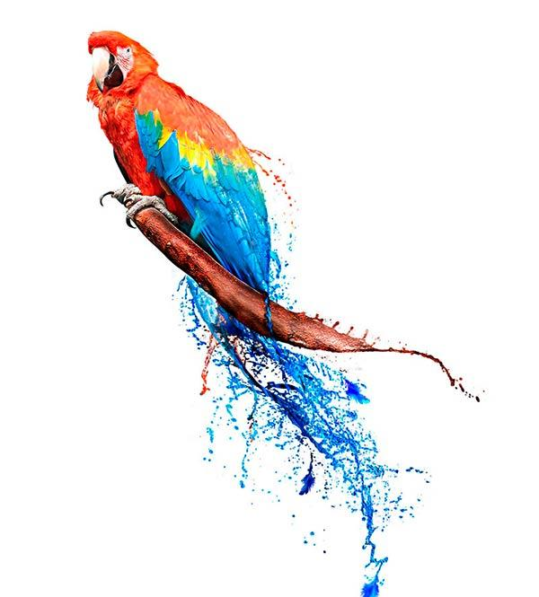 попугай и фанера